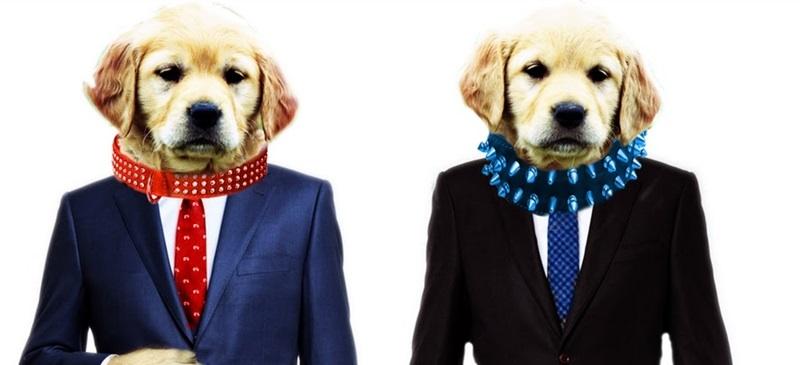 mismo-perro-distinto-collar